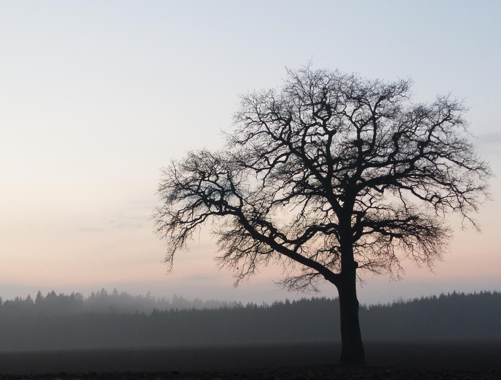 Steigerwald_Family_Tree_Blog